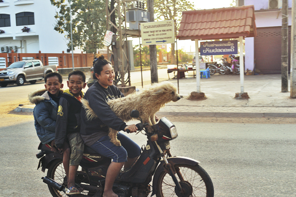four on a scooter plus dog