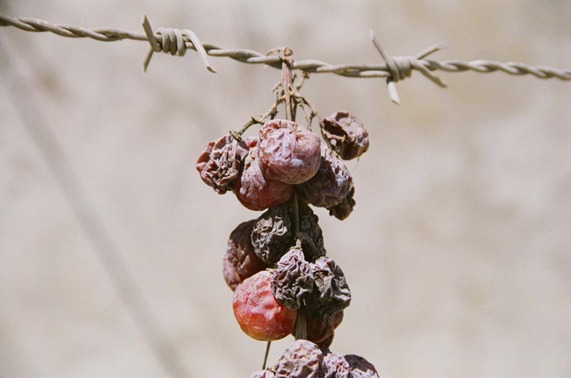 Grapes of war, Aaita El Chaab, Lebanon