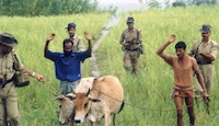 Bangladeshi cattle lifters/thieves